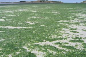 Marée verte dans le nord Finistère