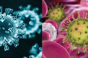 A gauche le covid-19, à droite le cytomégalovirus soupçonné de l'aider