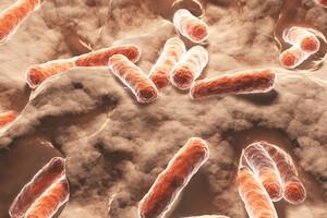 L'immaturité du microbiote intestinal à un rôle majeur dans la méningite chez le nourrisson.