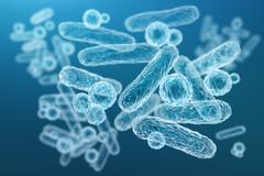 Le choix des souches associées qui détermine l'intérêt d'un probiotique.
