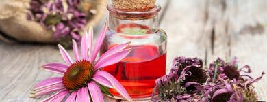 L'Echinacea purpurea, outre ses propriétés de stimulation immunitaire, est aussi considérée comme antifongique grâce à ses composés polyacétyléniques.