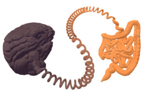 Le lien intestin cerveau, au coeur de nombreux problèmes de santé