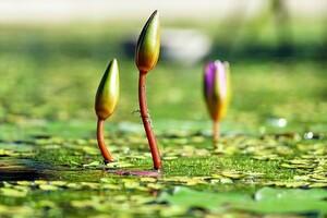 La gemmothérapie est basée sur l'utilisation des tissus embryonnaires des plantes.