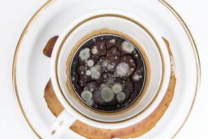 Tasse à café envahie de bactéries
