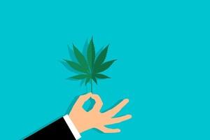 L'ANSM autorise l'accès au cannabis à visée thérapeutique en vue d'une expérimentation.