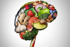 Le cortex cérébral contient 15 à 20 % de DHA, une fraction spécifique des