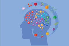 Cerveau : comment boen le nourrir