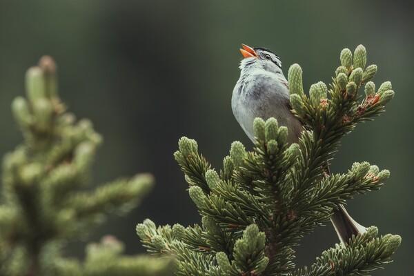 Beaucoup de personnes ont été émerveillées par le chant des oiseaux le matin.