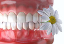 Les dents, des éléments vivants
