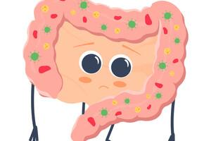 La perméabilité et la dysbiose intestinales en cause