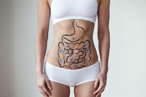 Quels liens entre microbiote et équilibre des oestrogènes ?