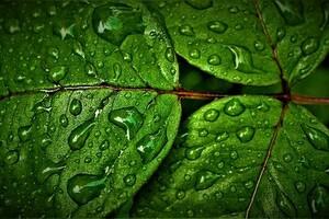 La chlorophylle, efficace de la bouche au rectum