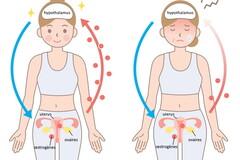 La prise de la pilule comme son arrêt impactent la chaîne hormonale