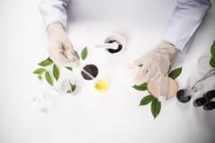 Une récolte mécanique pénalise la quantité de molécules actives et leur qualité.