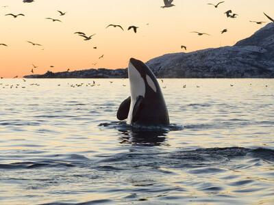 On estime que 3 000 mammifères marins ont été tués en 2019.