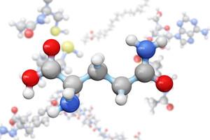 L'acide aminé glutamine est le moyen le plus étudié pour améliorer la perméabilité intestinale.