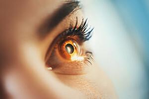 La macula est la zone de la rétine, à l'arrière de l'oeil, où convergent les rayons lumineux.