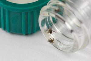Lyme : de nouveaux tests fondés sur les bactériophages
