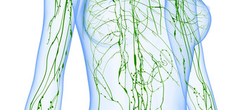 Santé : le système la lymphatique, grande oublié - Alternative Santé