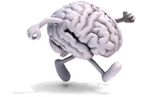 Le cerveau participe activement à la marche