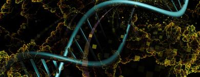 L'astragale rallonge les télomères à l'extrémité de nos chromosomes