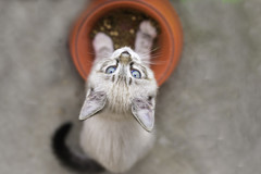 alimentation-chat-alternativesante.fr