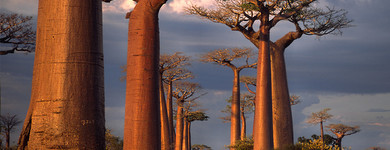 baobab-denutrition-personnes-agees-alternativesante.fr