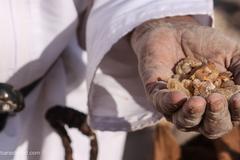 La boswellia serrata est immunostimulante et aide à la guérison des infections
