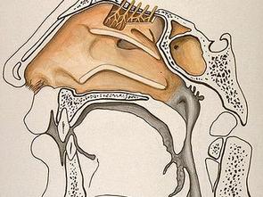 Sympathicothérapie: la santé par le bout du nez