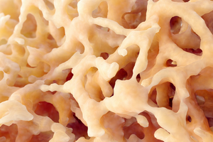 Des probiotiques contre l'ostéoporose