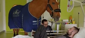 Énergétique:  un remède de cheval  - Alternative Santé