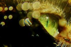 Les maladies oculaires des animaux