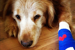 soigner-boiteries-chien-chat-homeopathie-alternativesante.fr