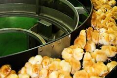Réduire la consommation de viande est la seule solution efficace applicable immédiatement.