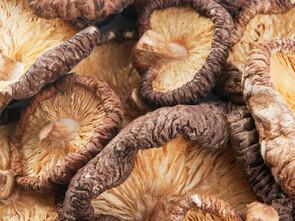 Shiitaké séché (Lentinula edodes)