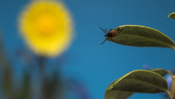 Lyme : traitements actuels et à venir