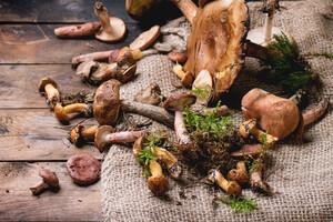 Manger des champignons pour prévenir les troubles cognitifs