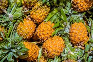 La bromélaïne est issue de la tige de l'ananas