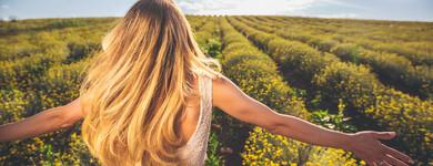 On l'appelle immortelle parce qu'une fois cueillie, cette élégante fleur jaune de la famille des astéracées ne fane pas.
