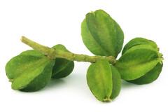 Diabète de type 2 : une plante indienne à la rescousse
