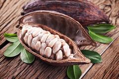 Les flavonols du cacao : prometteurs pour le maintien de la mémoire.
