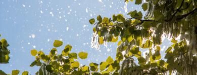 Allergies de saison : misez sur les huiles essentielles