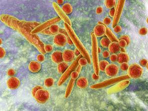 La bactérie mycoplasma