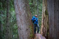 Quand la forêt nous soigne