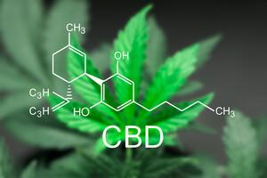 Le CBD, poil à gratter des débats sur le cannabis thérapeutique
