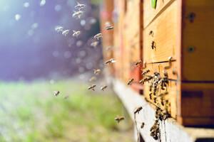 Apithérapie, les abeilles nous soignent