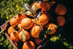 Les bienfaits de la vitamine C ne sont pas encore tous connus.