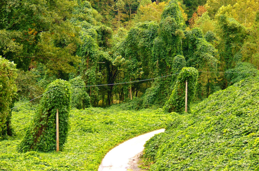 kudzu-sevrage-naturel-addiction-alternativesante.fr