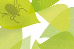 Les tiques, vecteurs principaux de la maladie de Lyme