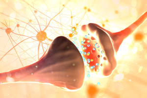 Les neurohormones, messagers des neurones